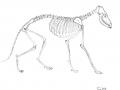fuchs_skelett_bw