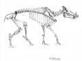 wildschwein_skelett_bw