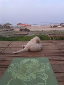 Hund auf Yogamatte